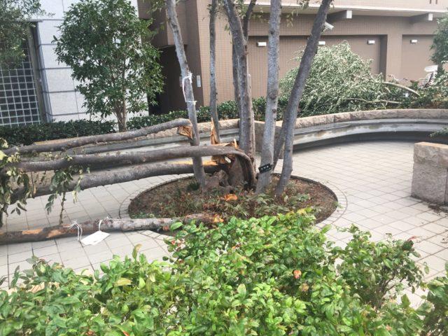 台風21号 大阪市東成区