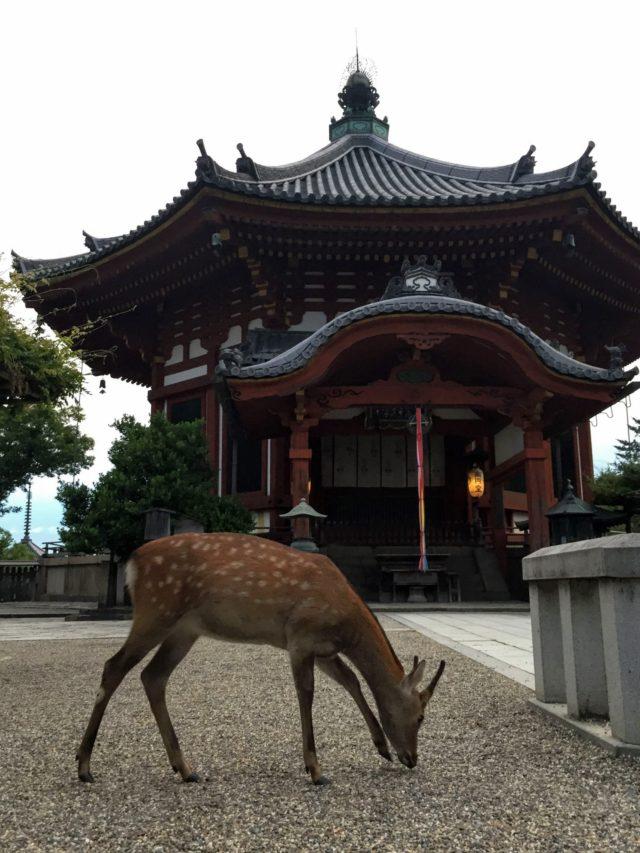 南円堂 しか 興福寺
