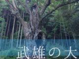 【佐賀県/武雄市】樹齢3000年の大楠!楠木全体を見ることができる「武雄の大楠」