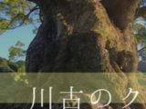 【佐賀県/武雄市】樹齢3000年の大楠!わいわい楽しい「川古のクス」
