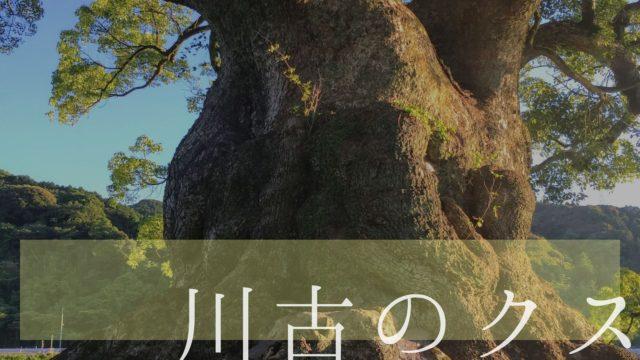 川古のクス 佐賀 大楠 樹齢3000年