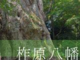 【大分県/大分市】樹齢3000年の大楠!神秘的な「柞原八幡宮」