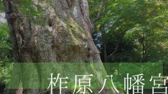 柞原八幡宮 大楠 樹齢3000年