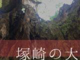 【佐賀県/武雄市】樹齢2000年の大楠!幹の中に入れる「塚先の大楠」
