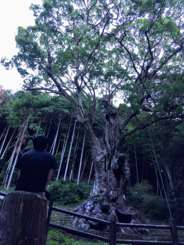 武雄の大楠 佐賀 樹齢3000年
