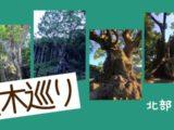 樹齢3000年の巨木巡り!北部九州編(大分・佐賀)