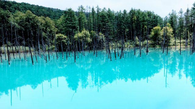 【北海道/美瑛】死ぬまでに一度は見たい景色「青い池」は超神秘的でした!
