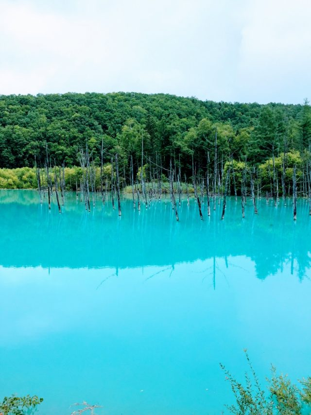 北海道 青い池 写真