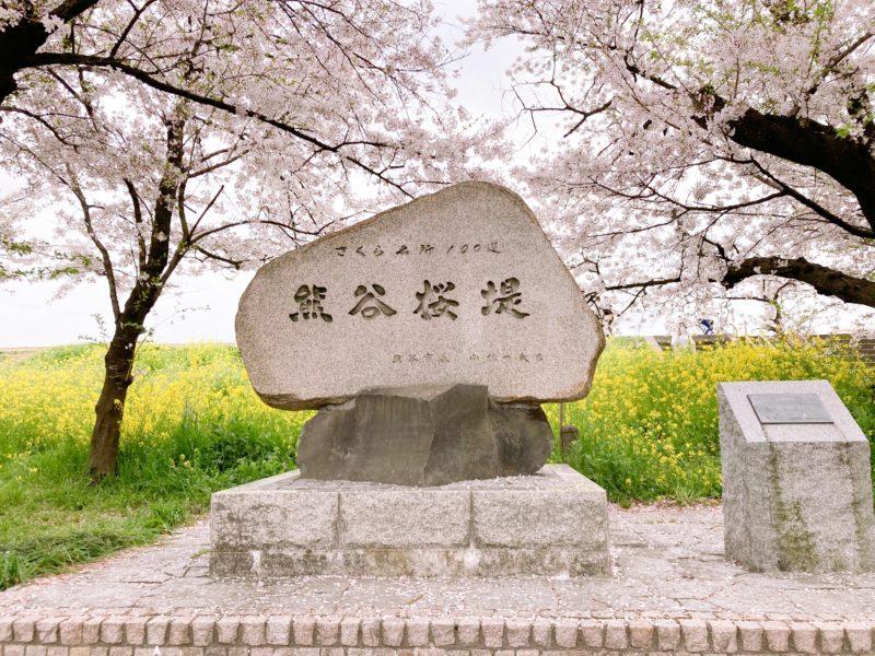 熊谷桜堤 桜名所