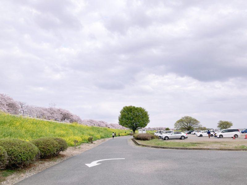 熊谷桜堤 駐車場