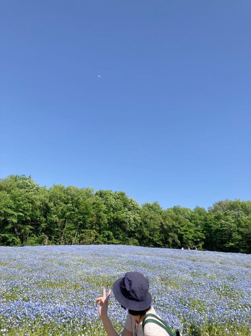 国営武蔵丘陵森林公園 ネモフィラ