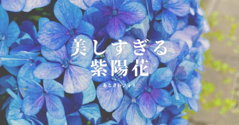 美しすぎる 紫陽花 写真